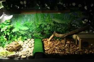 Террариум для черепахи – фото обустройства