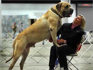 Размеры и вес крупной собаки