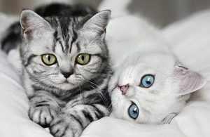 Кошки и болезни почек