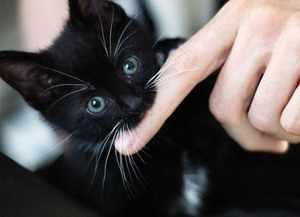 Способы объяснить котенку, что кусаться нехорошо