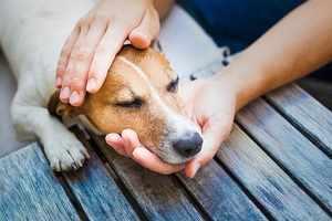 Описание и особенности аллергии у собак