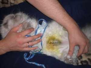 Как происходит стерилизация кошек