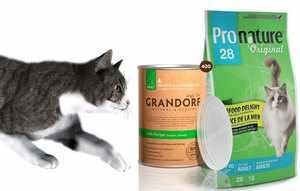 Какой корм выбрать для своей кошки