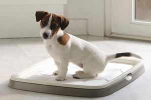 Как приучить собачку к лотку