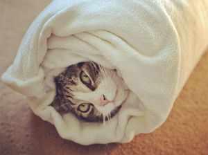 Как давать таблетки кошке