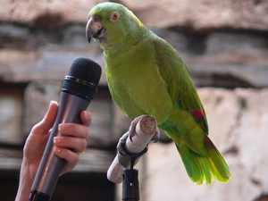 Возможность научить говорить попугая