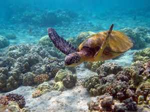 Черепаха в тихом океане