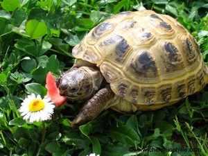 Описание черепах