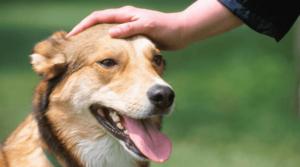 Приучение собаки к туалету через похвалу