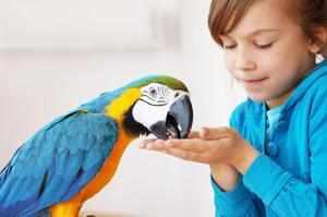 Ласковое обращение с попугаями