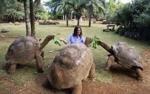 Большие черепахи в зоопарке