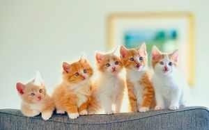 Подрастающие котята