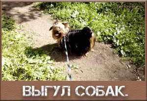 Выгул собак - основные правила