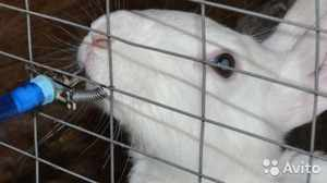 Автопоилка для кроликов