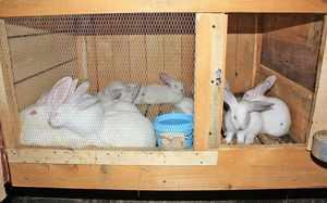 Описание требований и условий к кроличьим клеткам