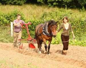 Рабочая лошадь - помощь в хозяйстве