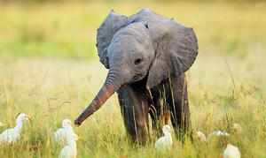 Слоны: забавные факты