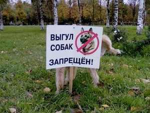 Основные правила выгула собак и требования закона