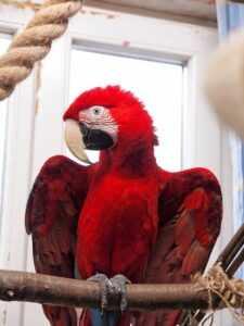 Попугай ара уход