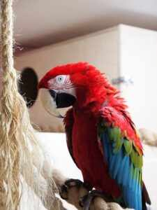 Попугай ара уход и содержание
