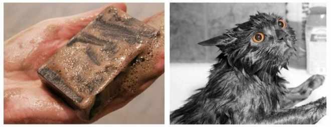 Дегтярное мыло и кошка