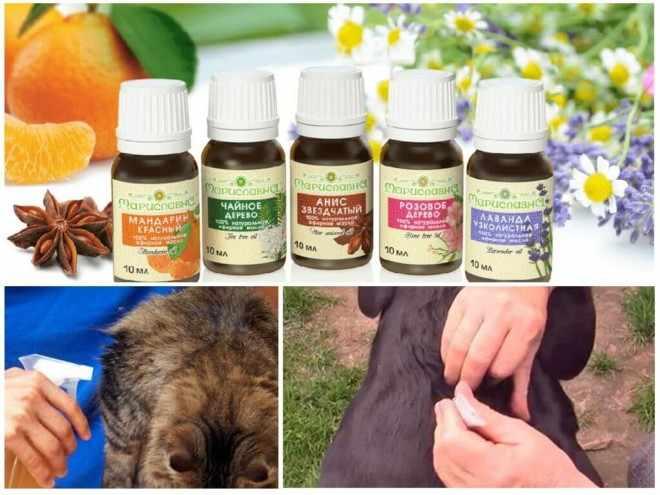 Эфирные масла от блох для животных