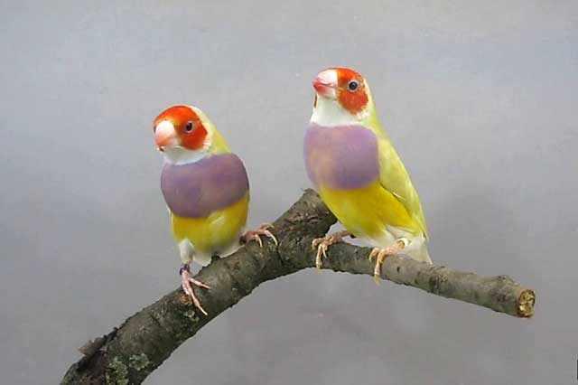 Птицы питаются зернами и семенами растений