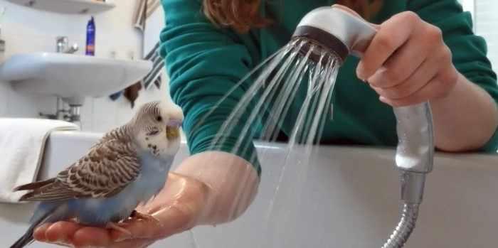 Попугай принимает душ вместе с нами