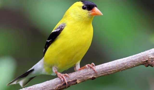 От питания зависит здоровье птицы