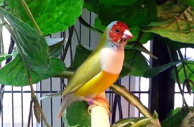 У взрослых птиц на клюве есть царапины