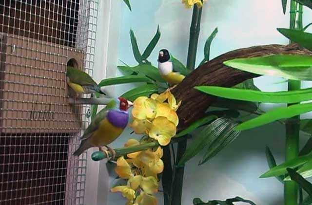 Среди цветов птицы будут чувствовать себя хорошо