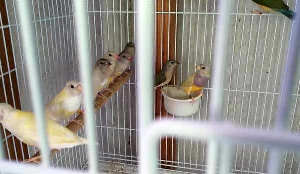 Птенцы учатся самостоятельности