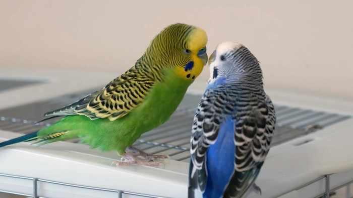 Мы съездили в санаторий и привезли оттуда попугаев