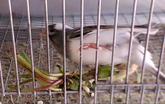 Молодая зелень полезна для птиц