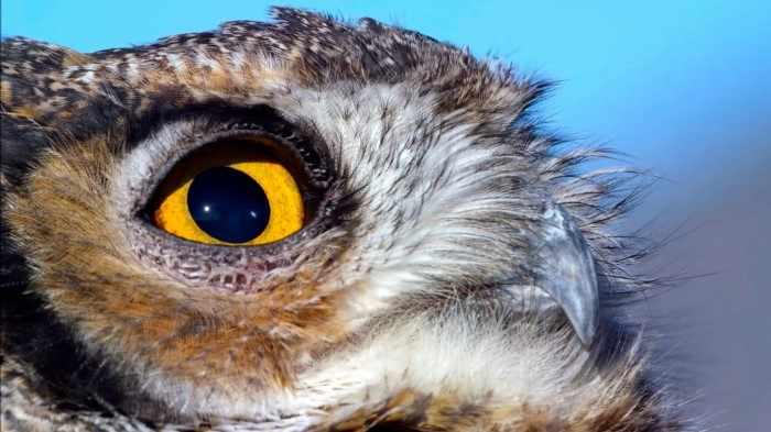 Почему совы такие успешные охотницы