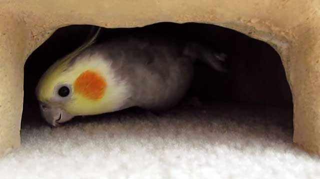 Самка может отложить яйца где угодно
