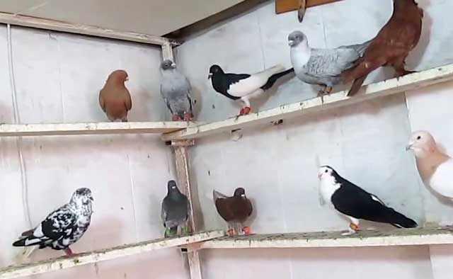 Птицам противен запах пряностей