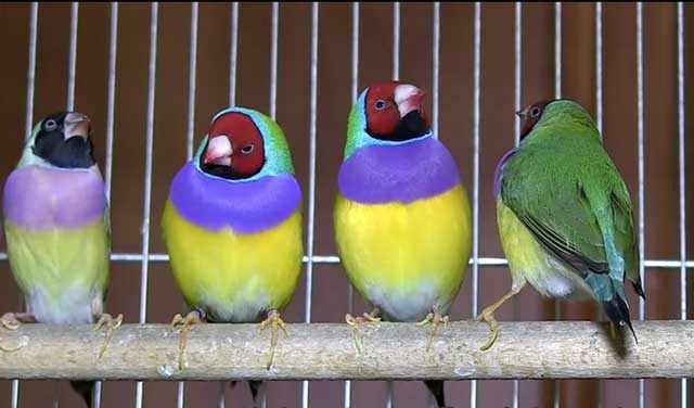 Красивые разноцветные птицы