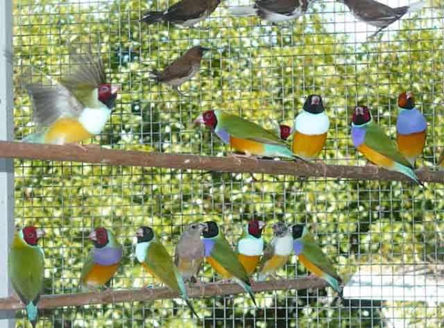 Большая стая птиц