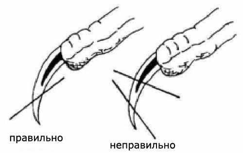 Как нужно отрезать когти