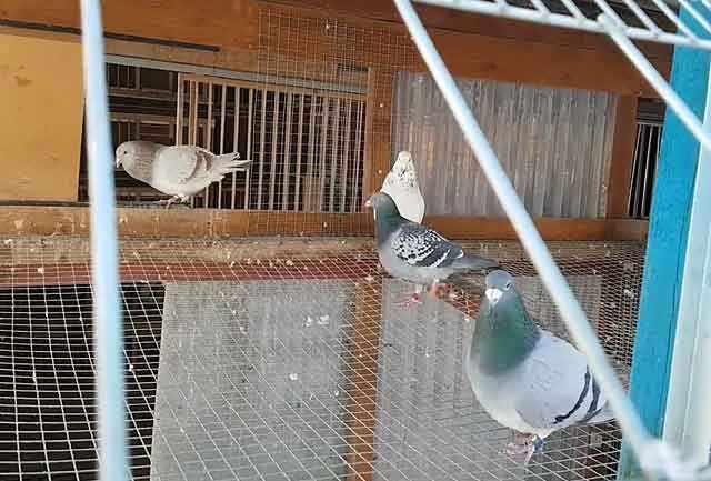 Отличный вариант - корм для средних попугаев