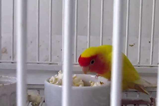 Птица с удовольствием съест кашу из риса с овощами
