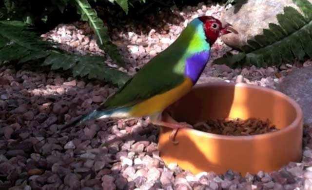 У птиц должна быть свежая еда