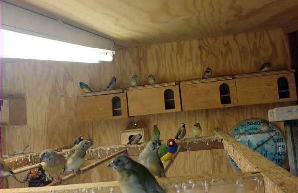 У птиц должны быть особые условия для гнездования