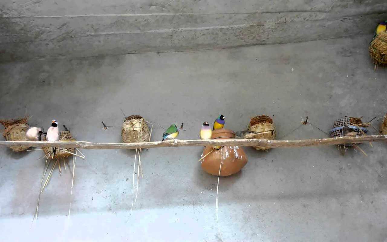 Гнездовой период
