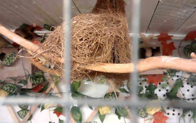 Птицы сплели гнездо