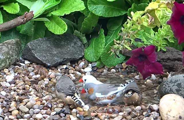 Птицы в природе самостоятельно добывают пищу и воду