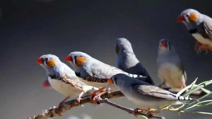 Некоторые птицы поют даже во сне