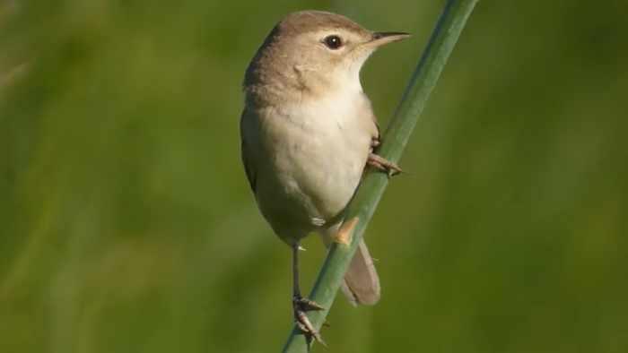 Что делают птицы в июне