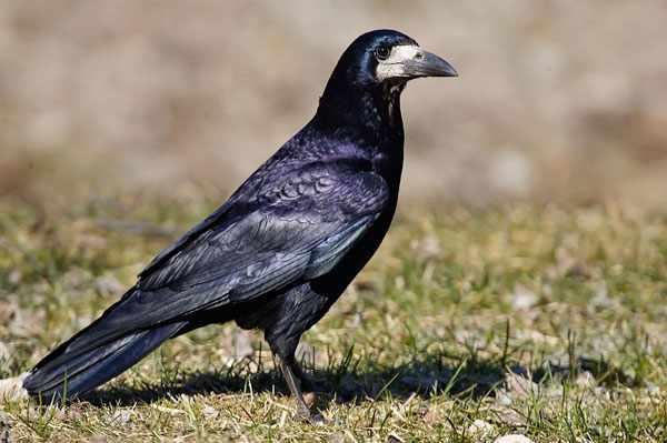 Не давайте птице испорченные продукты